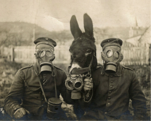 Soldiers and mule wearing gas masks