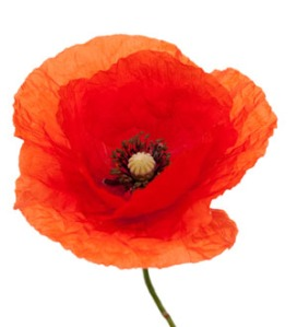 poppy_image_ww1_database